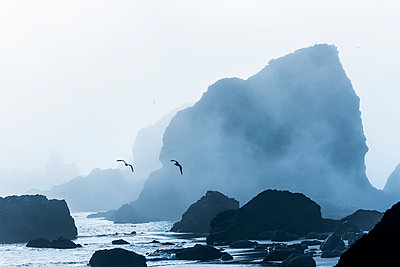 Sea stacks are silhouetted against fog at Ecola State Park; Cannon Beach, Oregon, United States of America - p442m2039285 by Robert L. Potts