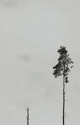 Forest decline - p444m898517 by Müggenburg