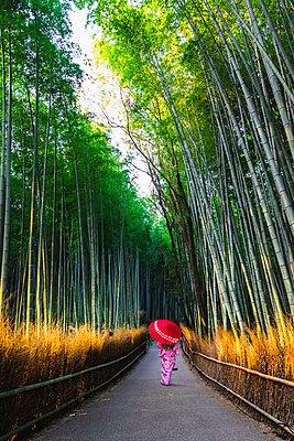 Arashiyama, Kyoto, Kyoto prefecture, Kansai region, Japan. Woman in traditional kimono walking in the bamboo grove at sunrise (MR). - p651m2062118 by Marco Bottigelli