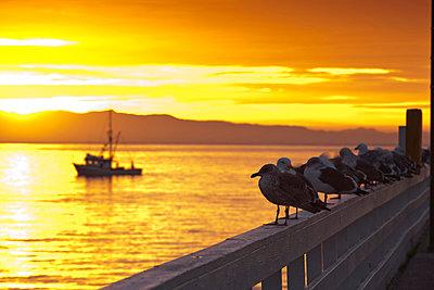 USA, California, Central Coast, Santa Cruz, Municipal Wharf, dawn - p651m861042 by Walter Bibikow
