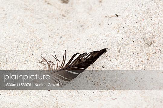 p300m1153976 von Nadine Ginzel
