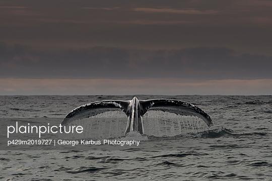 p429m2019727 von George Karbus Photography