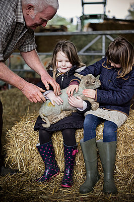Children and new-born lambs in a lambing shed. - p1100m906711f by Emily Hancock