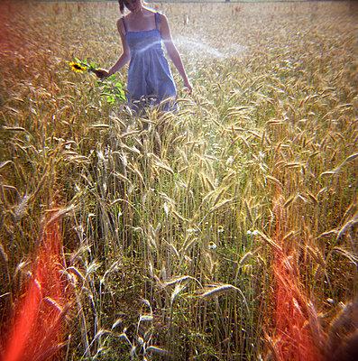Teenage girl walking in corn field - p4903226 by Sabine Fritsch