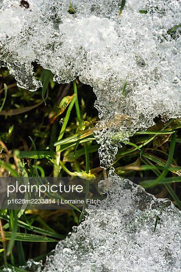 Icy grass - p1628m2233814 by Lorraine Fitch