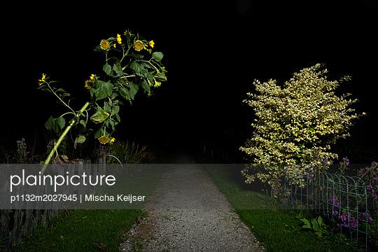 Sonnenblume - p1132m2027945 von Mischa Keijser