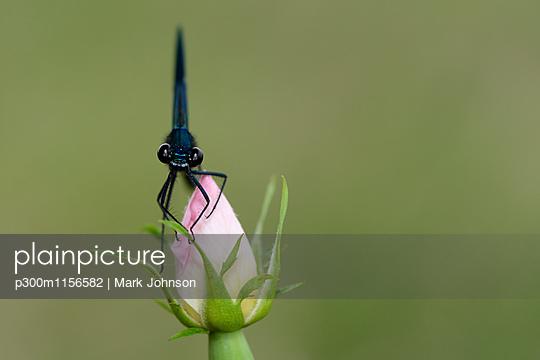 p300m1156582 von Mark Johnson