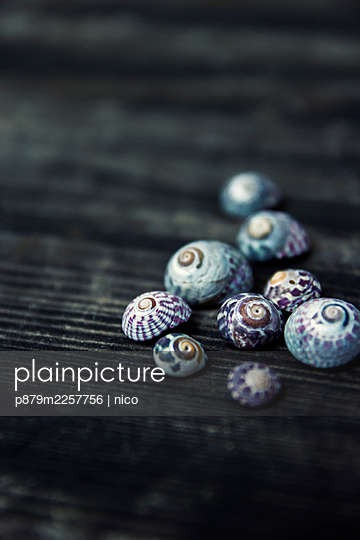 Colourful snail shells - p879m2257756 by nico