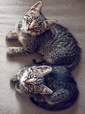 Kittens - p1507m2027753 by Emma Grann