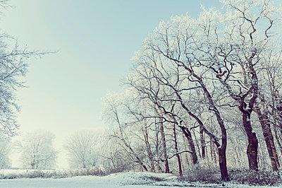 Germany, snow covered winter landscape - p300m911376f by Jana Mänz
