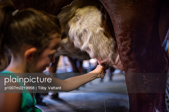 Girl milking a cow - p1007m2219958 by Tilby Vattard