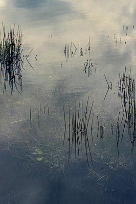 Clouds reflected in still river with reeds and underwater plants - p1047m2192747 by Sally Mundy