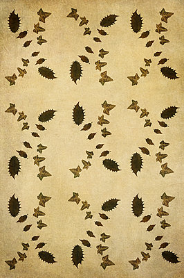 Computer generated abstract repeated pattern using dried pressed holly and ivy leaves on sepia background - p1047m2223001 by Sally Mundy