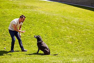A man training his dog. - p1166m2157446 by Cavan Images