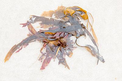 Seaweed - p417m2021723 by Pat Meise