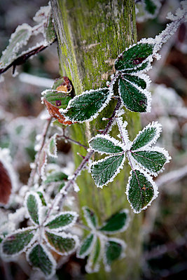 Freeze on leaves - p7780070 by Denis Dalmasso