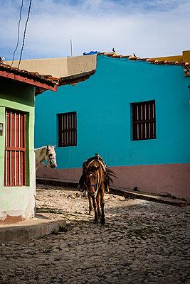 Two horses, Trinidad, Cuba - p1170m2185865 by Bjanka Kadic