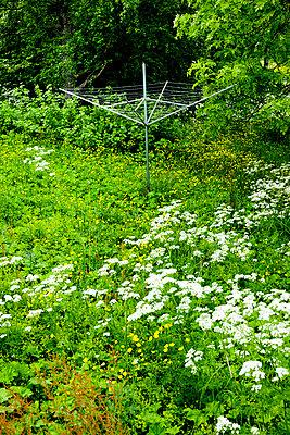 Verwilderter Garten - p248m817736 von BY