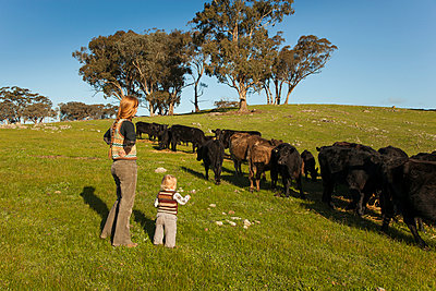 Kühe anschauen - p628m886702 von Franco Cozzo