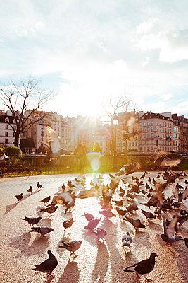 Viele Tauben auf Patz in Paris - p432m1222242 von mia takahara