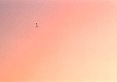 Wolkenlos - p1145m956168 von Kerstin Lakeberg