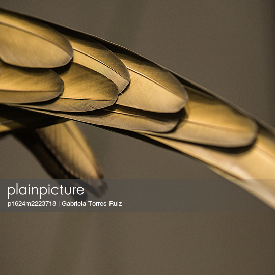 Gold-coloured metal plates - p1624m2223718 by Gabriela Torres Ruiz