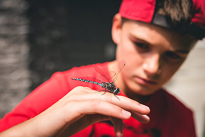Close up of boy examining a dragonfly that he is holding on his hand. - p1166m2137856 by Cavan Images