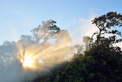 Erleuchtung, Hawaiʻi-Volcanoes-Nationalpark - p1196m1000679 von Biederbick&Rumpf