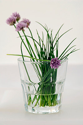 Chives in a glass - p3005640f by Achim Sass