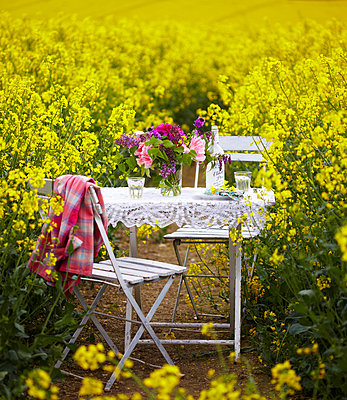 Table and chairs with cut flowers in field of  Rapeseed (Brassica napus). - p349m2167862 by Sussie Bell