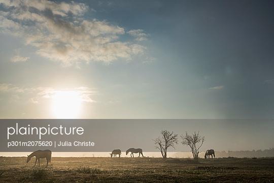 p301m2075620 von Julia Christe