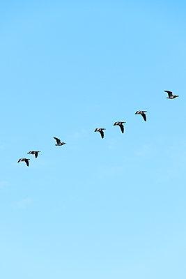 Vogelflug - p1079m1552871 von Ulrich Mertens