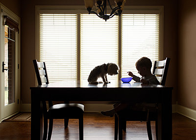 Boy eating while dog sitting on table at home - p1166m1174245 by Cavan Images
