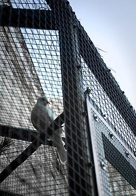 Imprisoned - p971m669127 by Reilika Landen