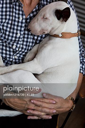 Hund - p958m1216739 von KL23