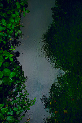 Close up of river bank shot from above - p5970152 by Tim Robinson