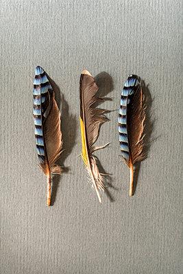 Three birds feathers - p1228m2125008 by Benjamin Harte