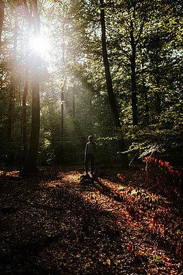Autumn forest - p1085m2073245 by David Carreno Hansen