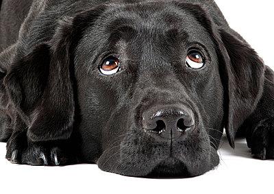 Black dog - p5320076 by Andrea Späth