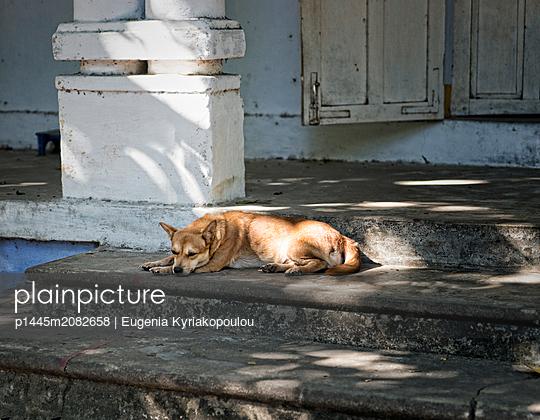 Hund auf Teppenstufen - p1445m2082658 von Eugenia Kyriakopoulou