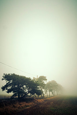 Trees at the edge of a field disappearing into the mist - p1302m2231249 by Richard Nixon