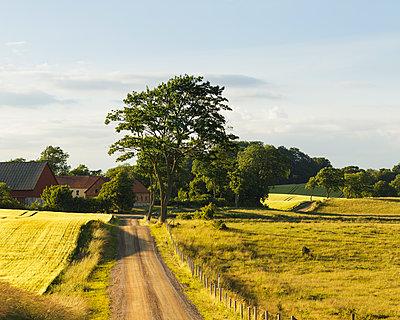 Sweden, Skane, Rockarp, Bramstorp, country road in rolling landscape - p352m1349314 by Gustaf Emanuelsson