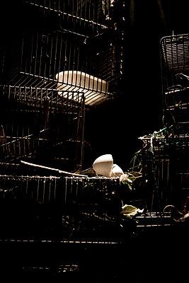 Empty cages - p6190113 by Samira Schulz