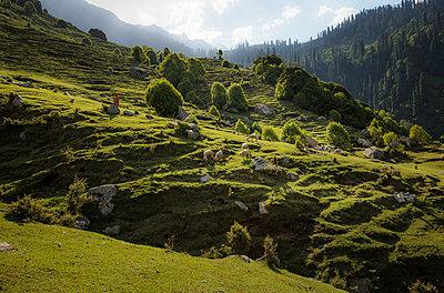 Schafherde auf einer Weide in Hanglage, Indien - p910m2214861 von Philippe Lesprit