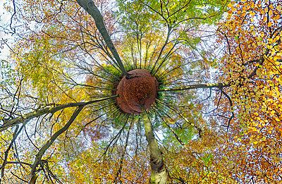 Cheltenham, Herbst - p1057m1072069 von Stephen Shepherd