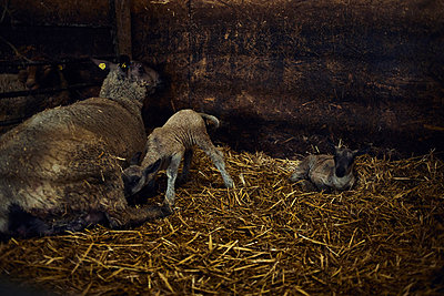 Just born - p1573m2272529 by Christian Bendel