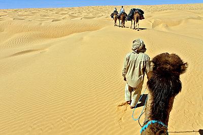 Sahara, Grand Erg Oriental - p636m931103 by François-Xavier Prévot