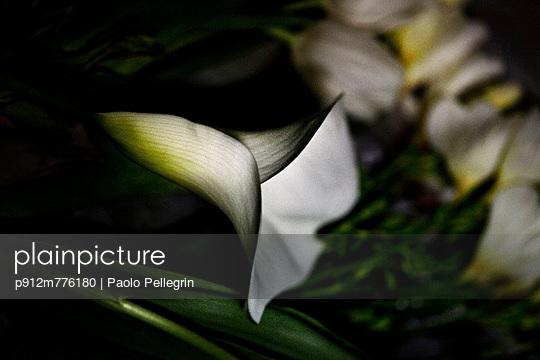 p912m776180 von Paolo Pellegrin