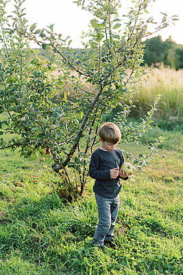 Toddler looking at a huge apple he has just picked. - p1166m2151887 by Cavan Images