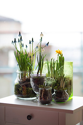 Glasses of different spring flowers - p300m998075f by Anke Scheibe